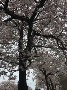 清水公園2015 003