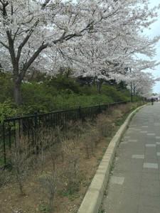 清水公園2015 040